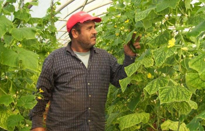 برنامج التمكين الاقتصادي للاجئين الفلسطينيين في لبنان